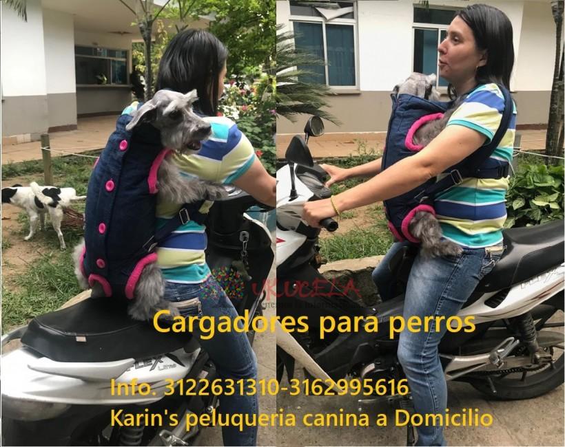 lindos cargadores para perros