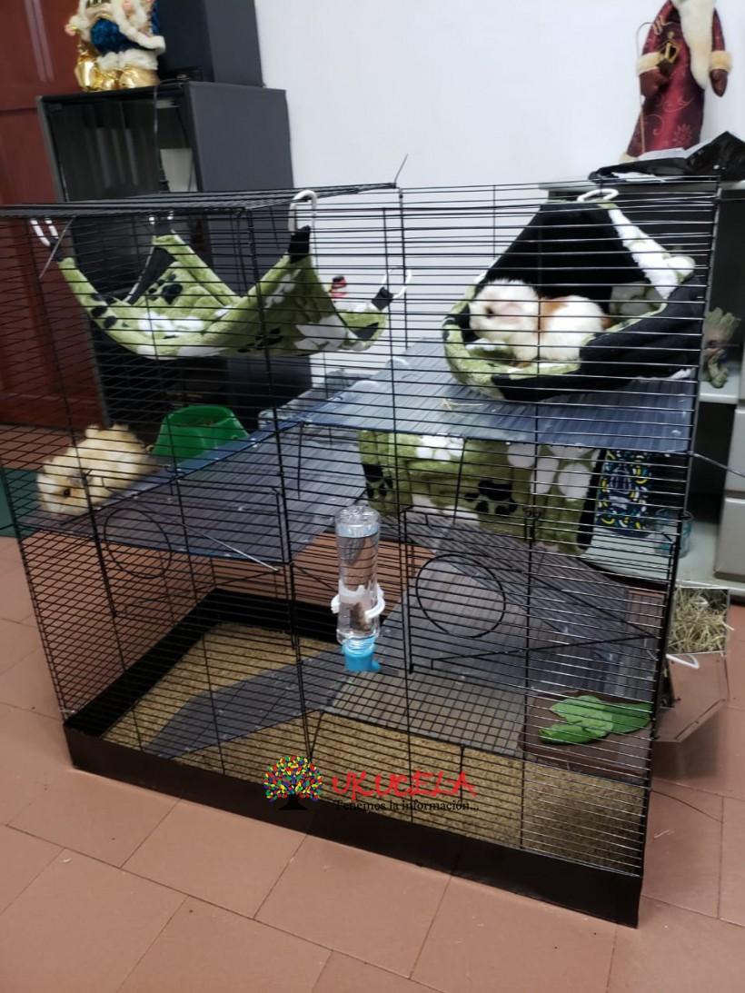 Jaulas para roedores medianos.
